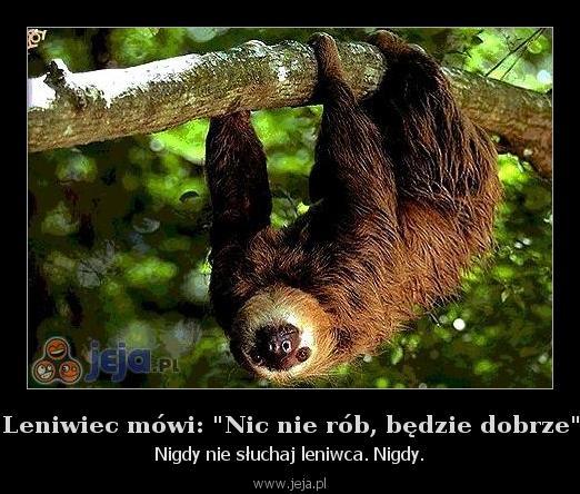 """Leniwiec mówi: """"Nic nie rób, będzie dobrze"""""""