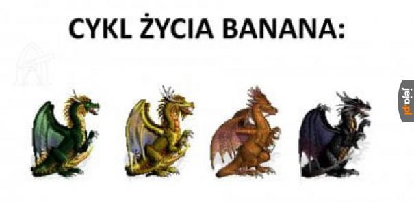 Cykl życia banana