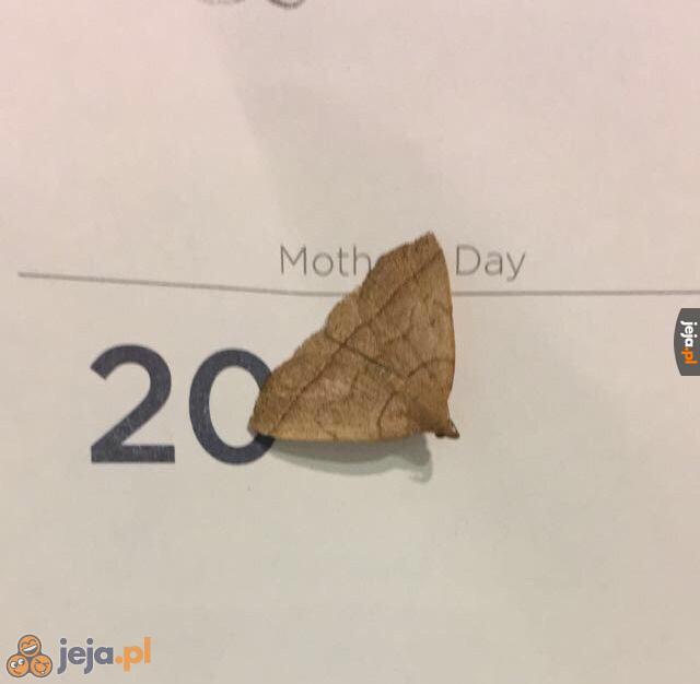 Dzień matki czy dzień ćmy?