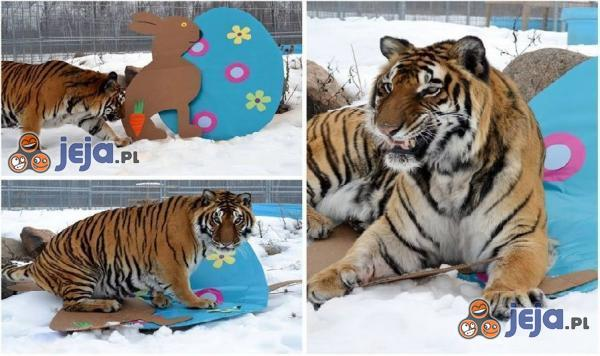 Tygrys, który nie lubił świąt