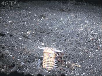 Podwodna pułapka