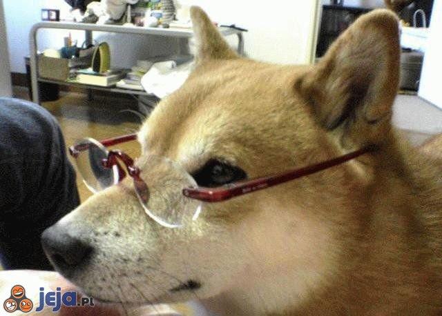 Psi profesor