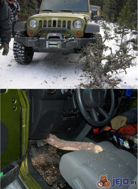 Pechowe zderzenie z drzewem
