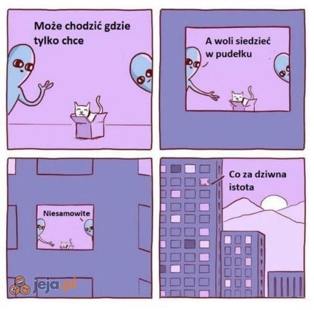 Obcy poznają koty