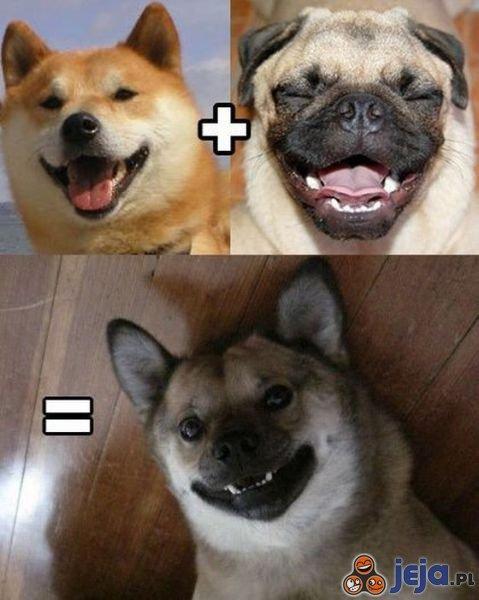 Psia krzyżówka