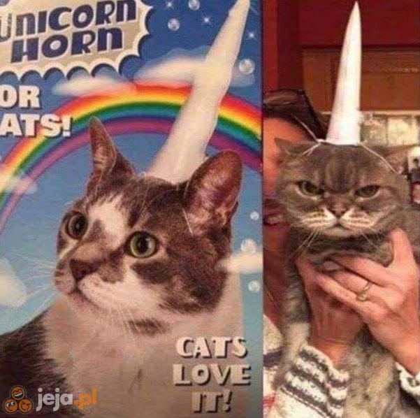 Chyba nie wszystkie kotki to uwielbiają