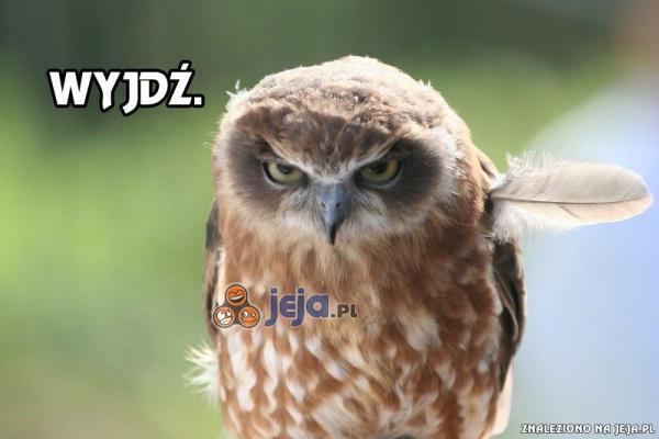 Gdy widzę idiotę w internecie...