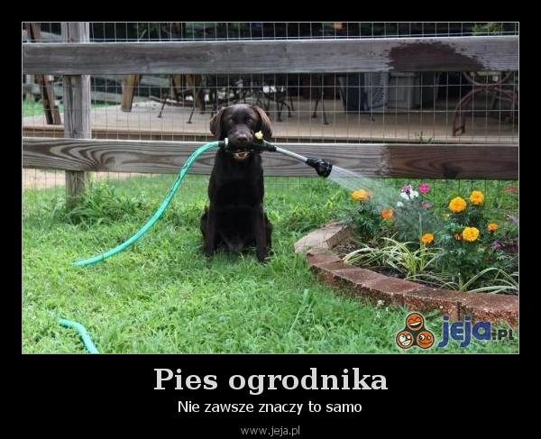 Pies ogrodnika