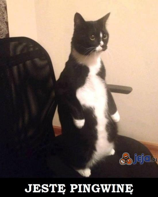Jestę pingwinę