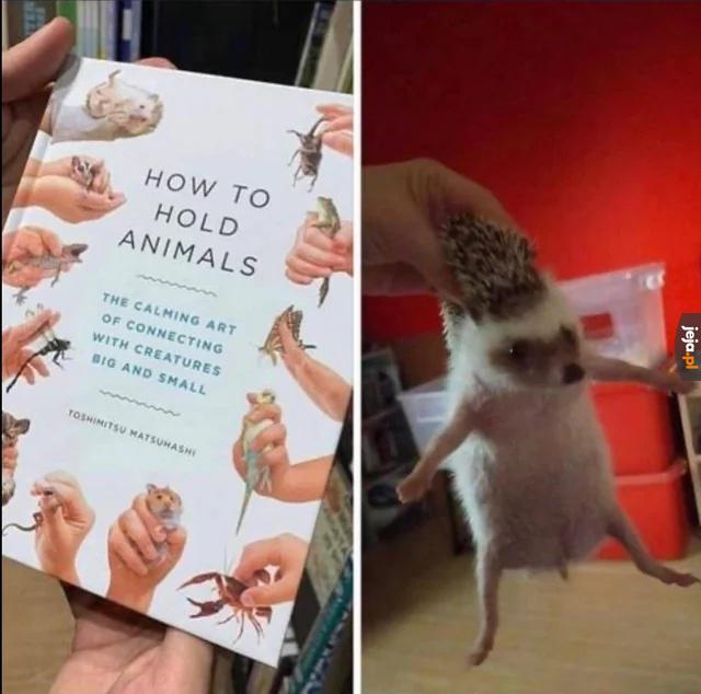 Jak trzymać zwierzaki