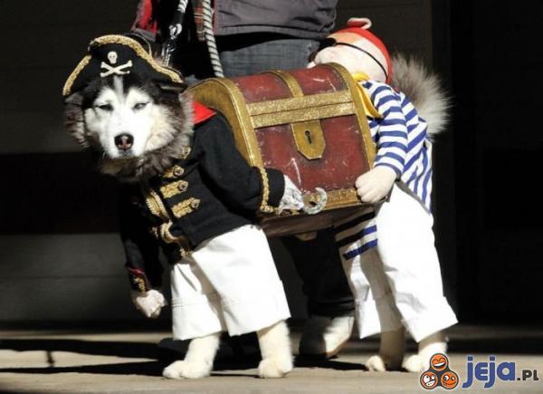 Najlepsze przebranie dla psa kiedykolwiek!