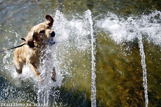 Pies przeciwpowodziowy
