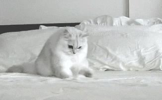 Szukając telefonu na łóżku...