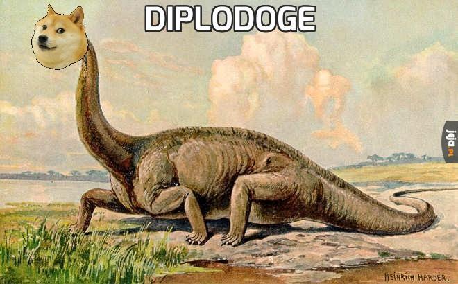 Diplodoge