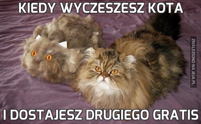 Kiedy wyczeszesz kota