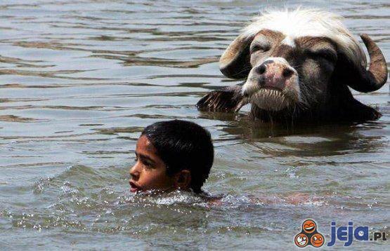 Każdy lubi sobie trochę popływać. Nawet Minotaur