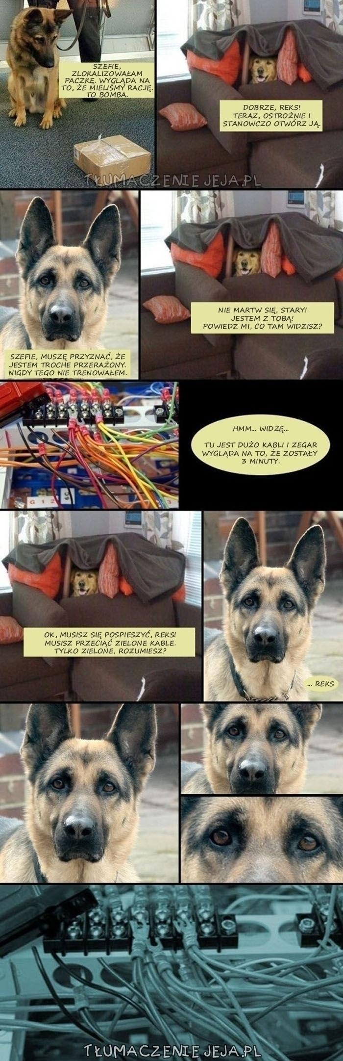 Psy w akcji