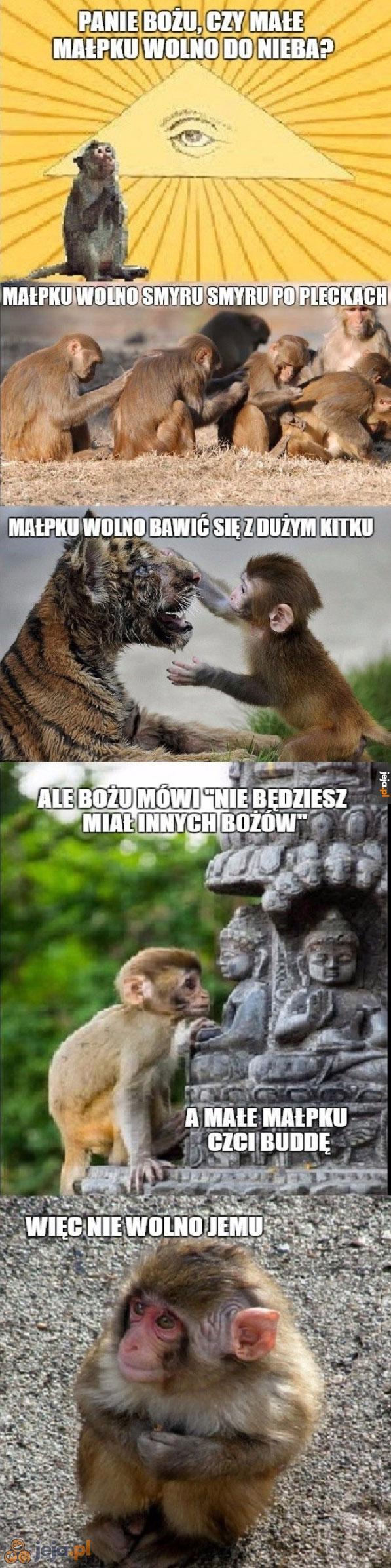 Tej małpki pośród aniołów nie będzie