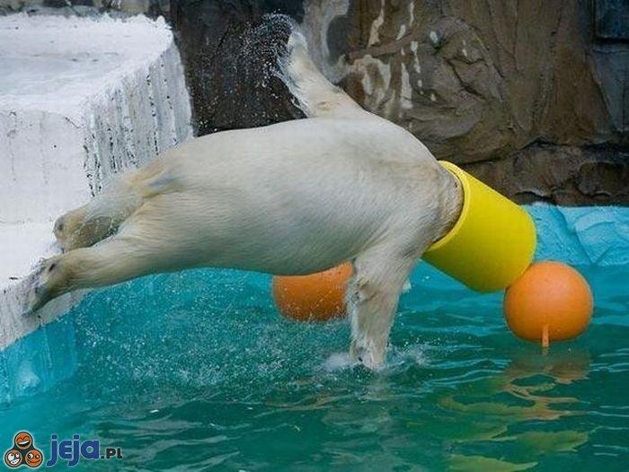 Niedźwiedź na basenie