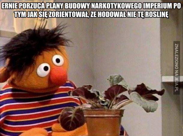 Narkotyki Erniego