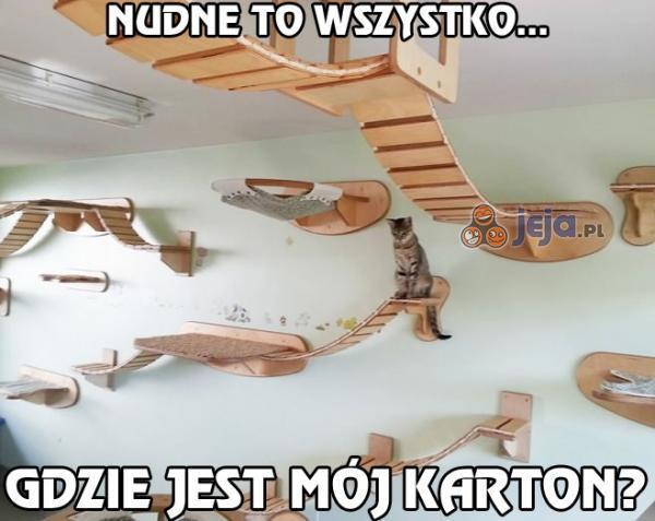 Wielki, wiszący plac zabaw dla kotów