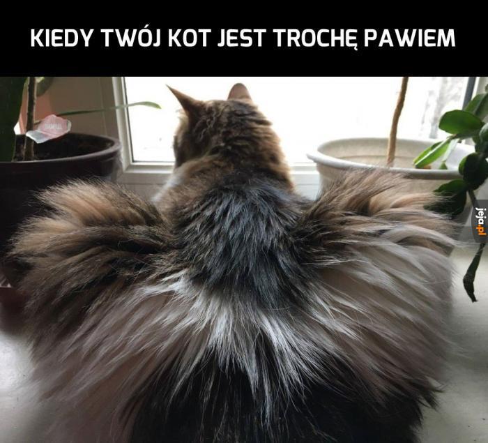 Kotopaw