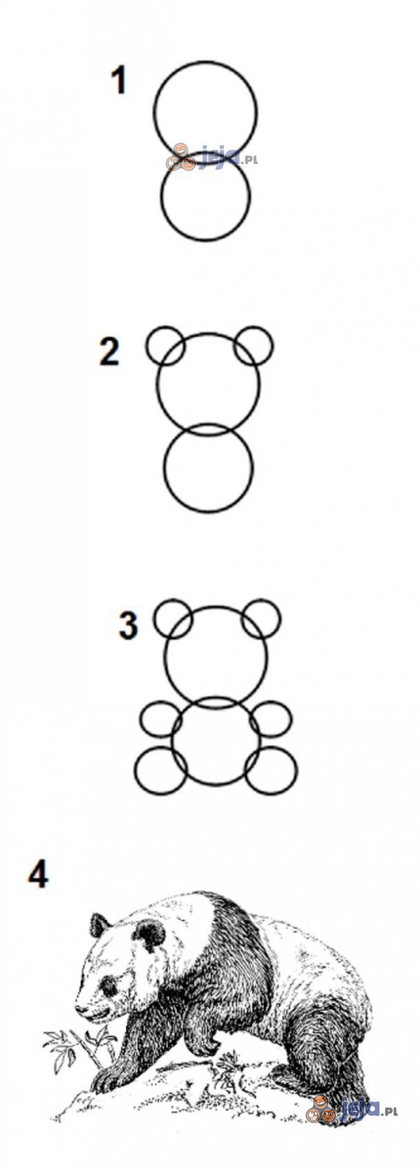Poradnik: Jak narysować pandę