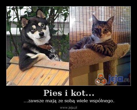 Pies i kot...