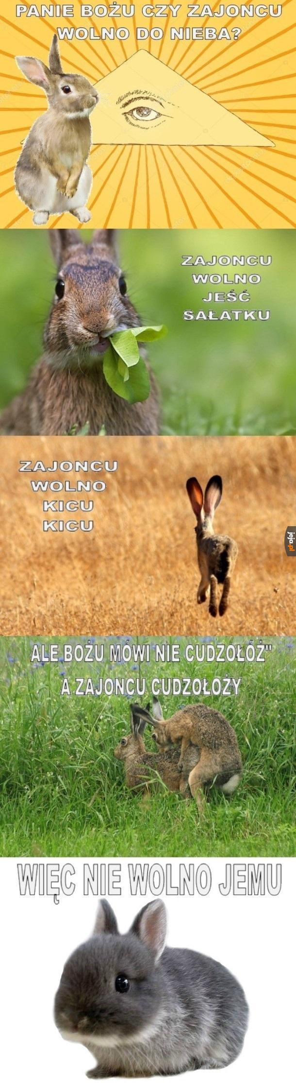 Są małe króliczki, nie ma raju