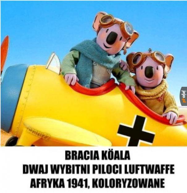 Bracia Köala