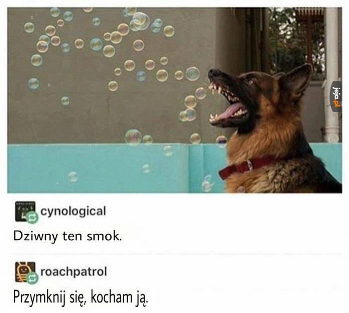 Smok niemiecki
