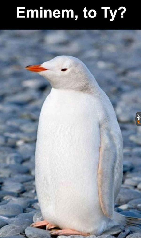 Pingwin albinos