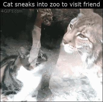 Koteł przyszedł do swojego przyjaciela w Zoo