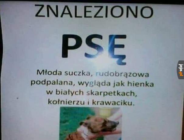 Osiągamy nieznane wcześniej poziomy języka polskiego