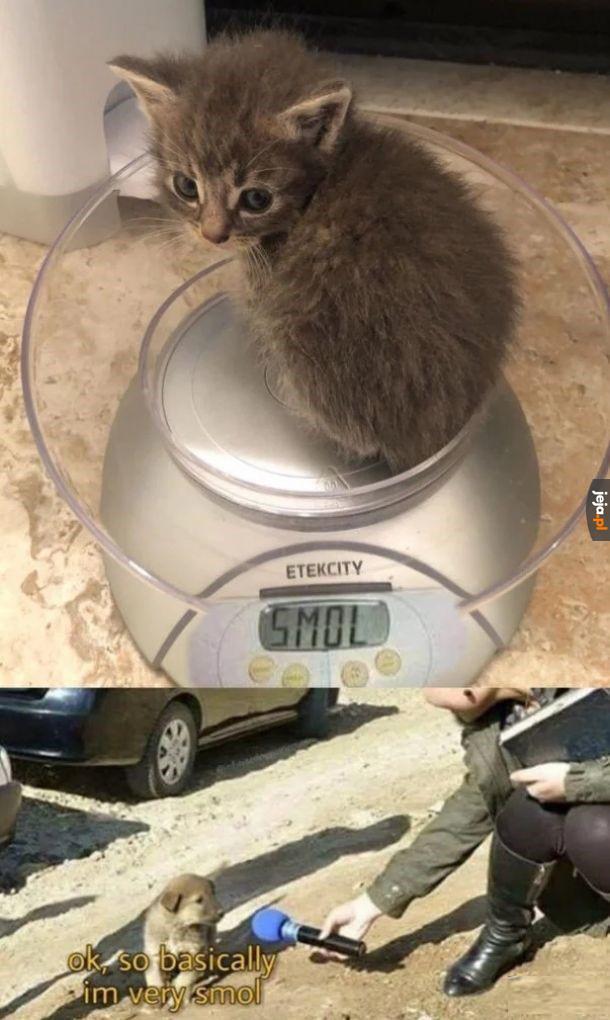 Moły ten kotek