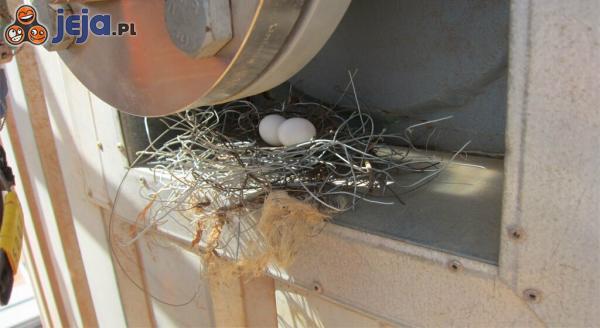 Druciane gniazdo