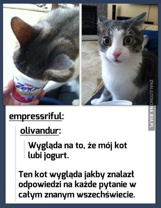 Jeden kot, a tyle mądrości