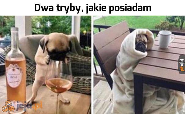Wino i burrito