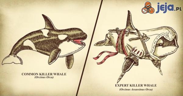 Orka zabójca i Orka ekspert zabójca