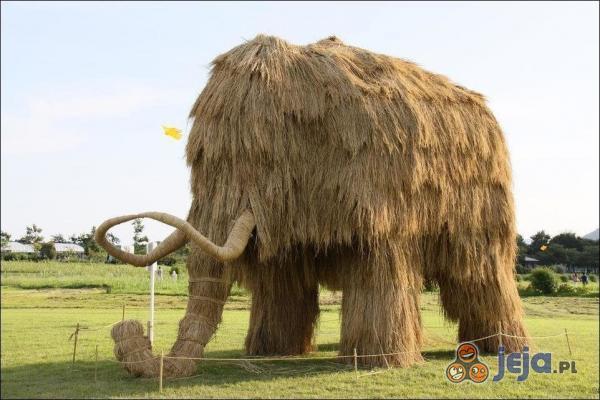 Słomiany mamut