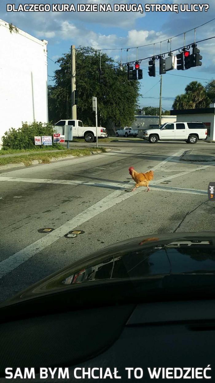 Dlaczego kura idzie na drugą stronę ulicy?