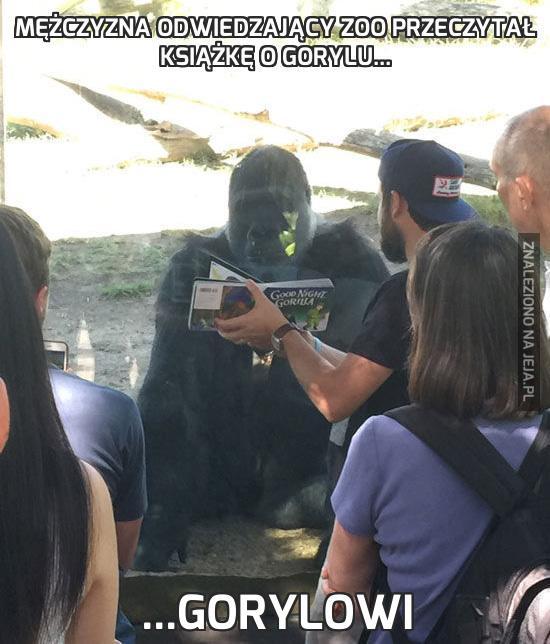 Mężczyzna odwiedzający zoo przeczytał książkę o gorylu...