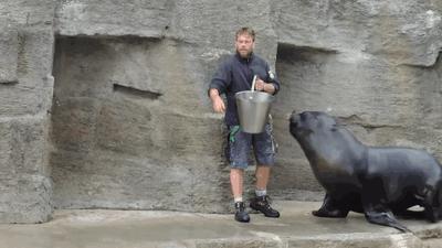 Jak wyrwać foki na wiadro
