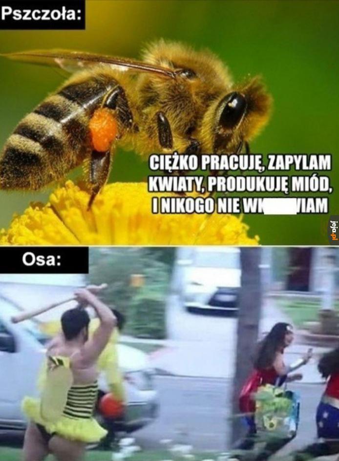 Zestawienie owadów