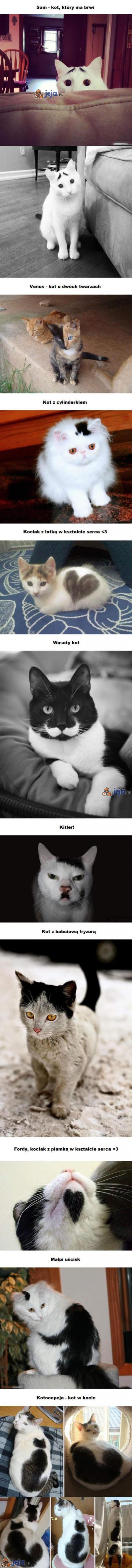Wyjątkowe koty
