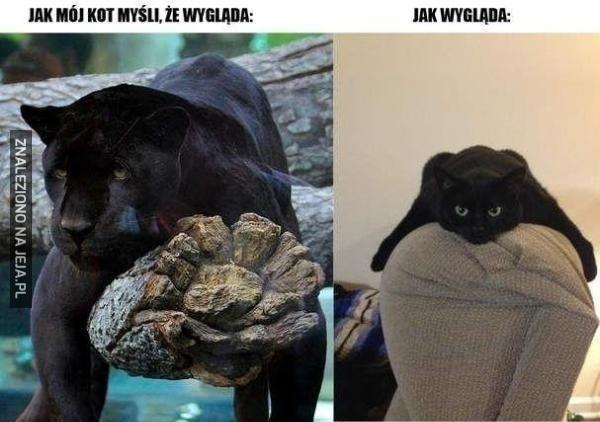 Wyobrażenia mojego kota