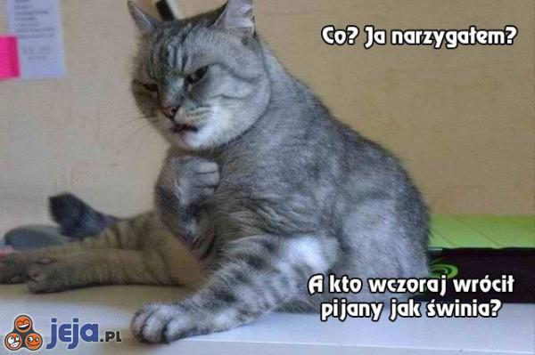 Kot jest oburzony Twoimi oskarżeniami
