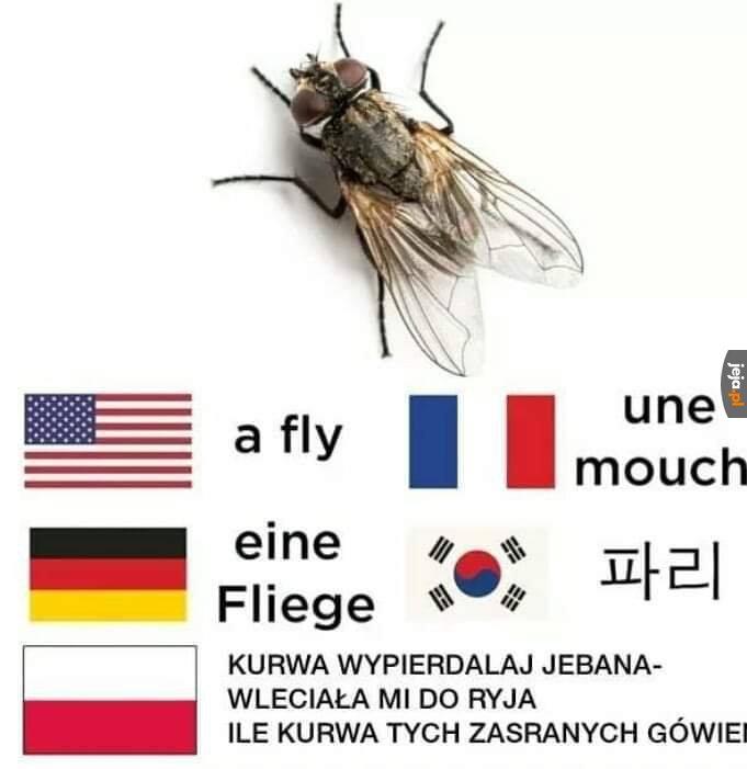 Mucha w różnych językach świata