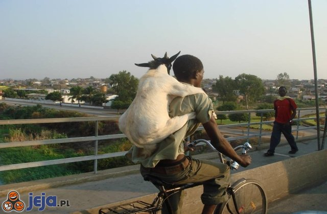 Koza na barana