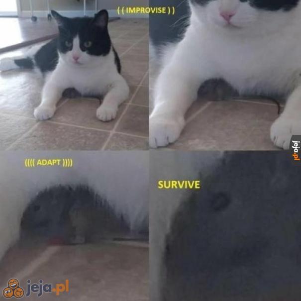 Powiadają, że ta mysz należała do Bear'a Grylls'a